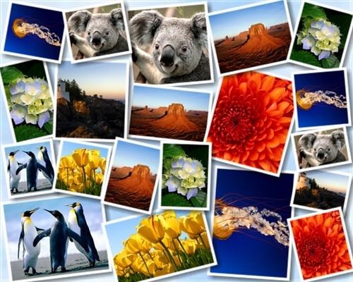 Creare collage di foto online gratis techbook appunti for Come costruire un programma online casa gratuitamente